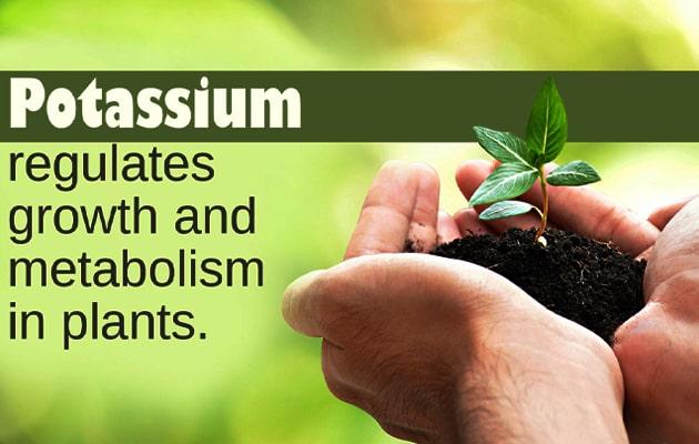 Potassium to Plants Benefits