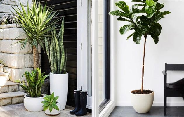 Outdoor-vs-Indoor-Plants