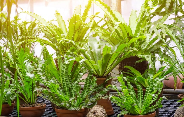 What-Do-Plants-Need-to-Grow