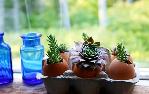 Eggshells-Good-for-Houseplants