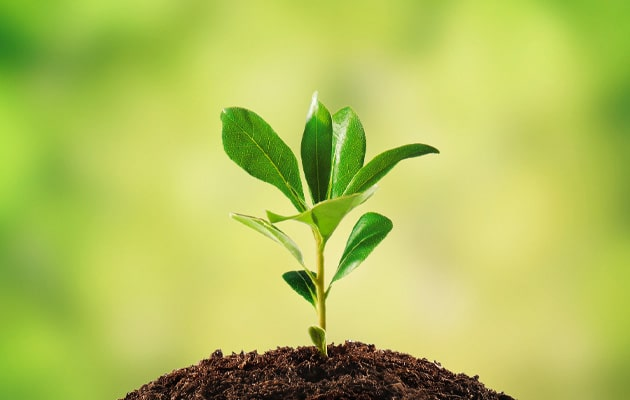 Plant-Get-Nutrients-From-The-Soil