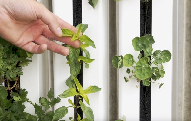 Plants-Nutrients